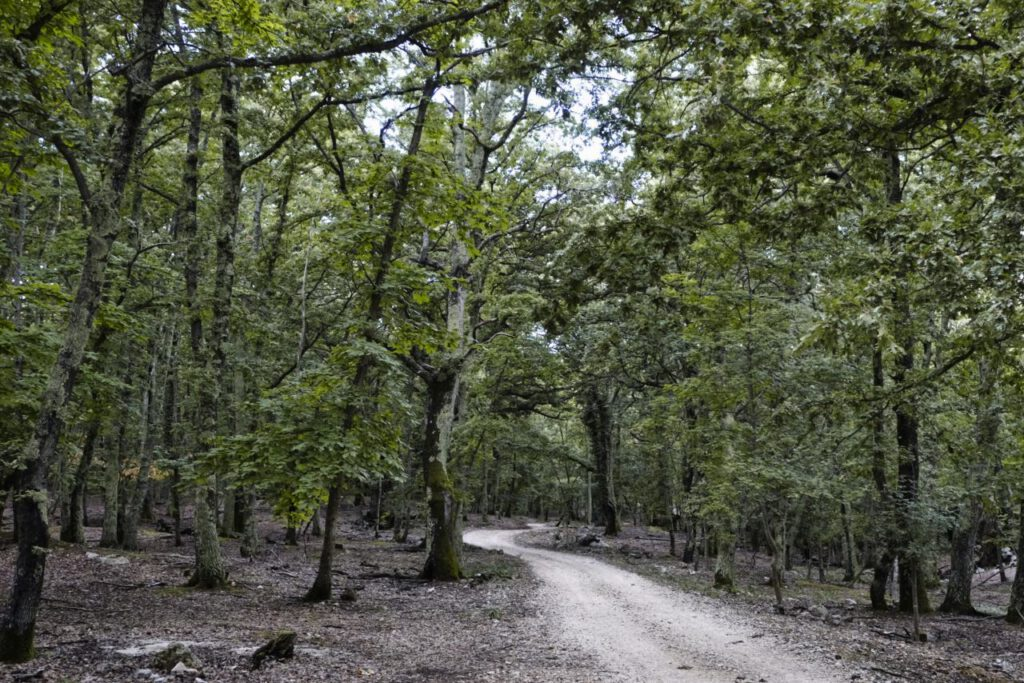 Eichenwald bei Beli auf Cres